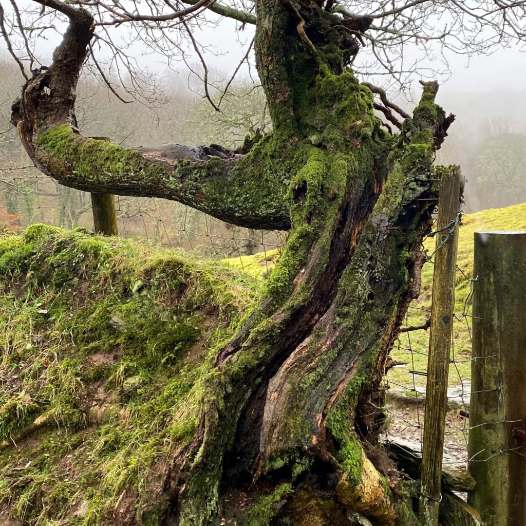 Walks in Exmoor - Primrose Cottage Exmoor